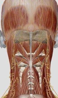 頭痛 神経